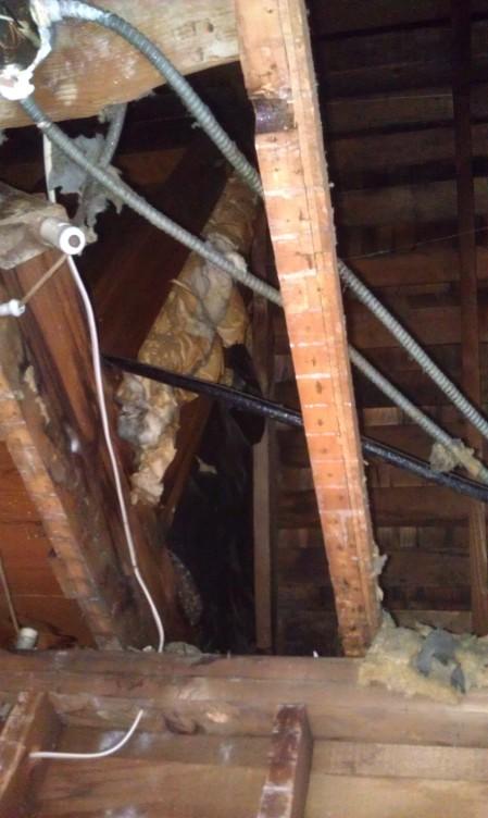 Upstairs revealed. (Back floor of Ashlans closet crawl space)