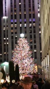 A slightly larger tree