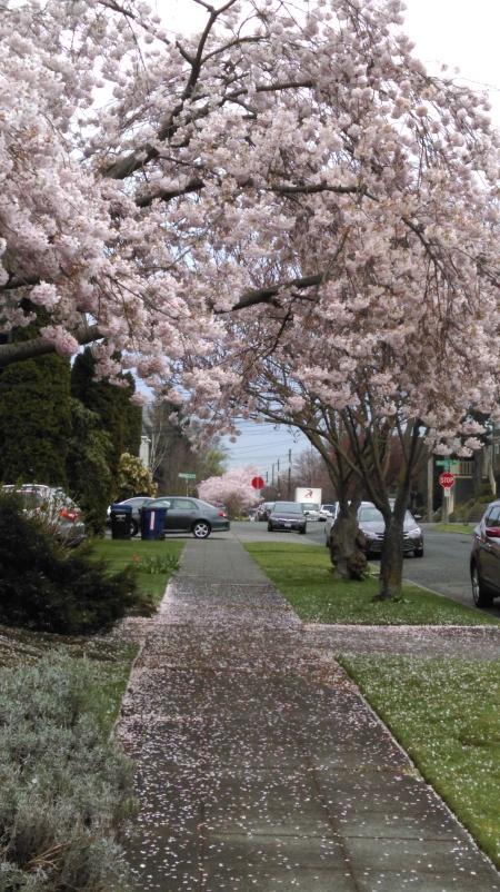 Springtime in Seattle